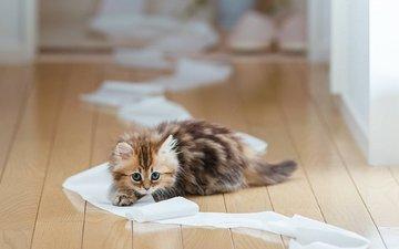 кошка, котенок, ben torode, дейзи, туалетная бумага