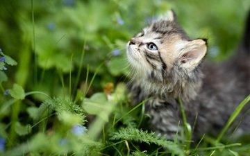 трава, природа, кот, лето, котенок, профиль, животное, детеныш