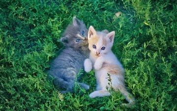 трава, мордочка, взгляд, коты, кошки, котята