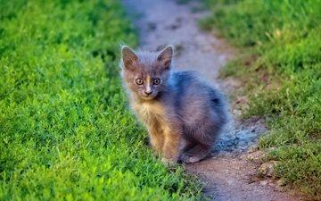 трава, кот, мордочка, кошка, взгляд, котенок