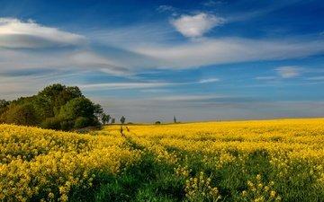 небо, цветы, облака, деревья, пейзаж, поле, лето, тропинка, даль, весна, церковь, синева, желтые, колея, рапс