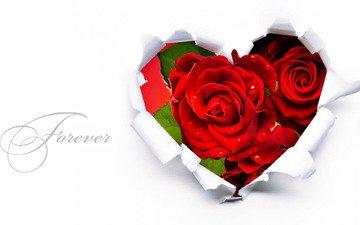 цветок, роза, сердце, романтика, подарок