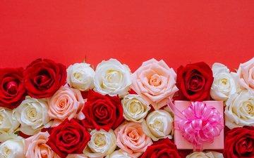 бутоны, розы, подарок, день рождения