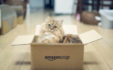кот, кошка, пушистый, игра, коробка, benjamin torode, дейзи
