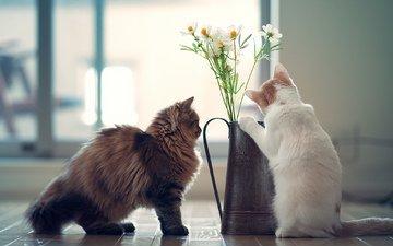 цветы, кот, кошки, дэйзи, бенджамин тород, ханна