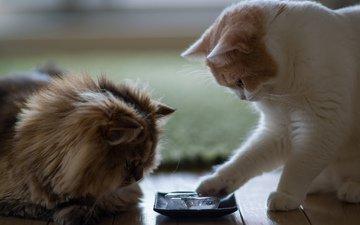кот, лёд, дом, кошки, benjamin torode, ben torode, дейзи, пиала, ханна