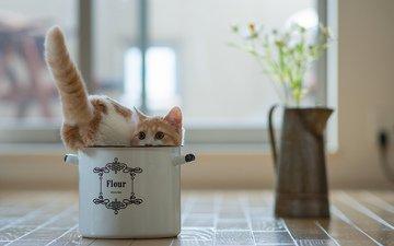 цветы, кот, котенок, горшок, игривый