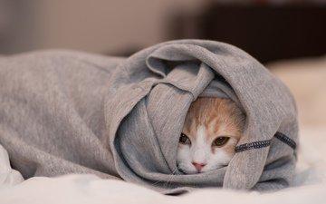мордочка, кошка, одежда, ben torode, ханна, спряталась