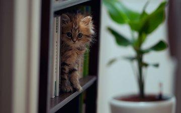 кошка, книги, ben torode, дейзи