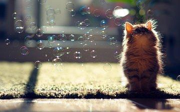 кот, пузыри, котенок, мыльные пузыри, ben torode