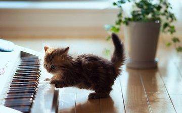 животные, кот, синтезатор, котенок, пушистый, пол, клавиши, ben torode, дейзи, игривый