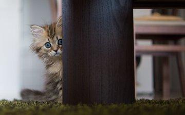кот, кошка, взгляд, котенок, прячется, испуганный