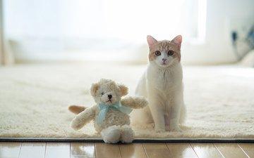 кот, benjamin torode, ханна, плюшевая игрушка