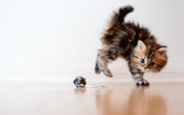 кот, кошка, котенок, игрушка, игра, ben torode, дейзи