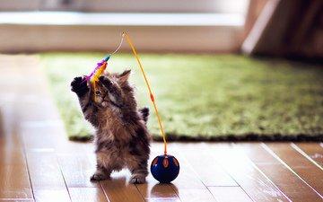 кот, котенок, игрушка, комната, перья, животное, ковер, ben torode