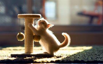 кот, кошка, котенок, игра, ben torode, ханна, когтеточка