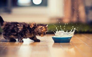 животные, кот, кошка, котенок, брызги, молоко, миска, ben torode, дейзи