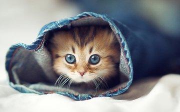глаза, кот, кошка, котенок, джинсы, постель