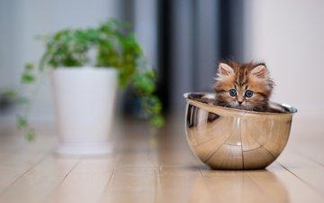 животные, кот, котенок, пол, растение, чашка, лежать