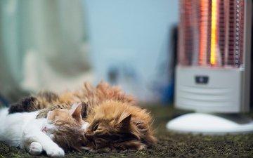 кот, пол, кошки, спят, ковер, benjamin torode, ben torode, дейзи, ханна, обогреватель