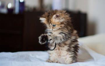 кот, кошка, котенок, игрушка, игра, медитация, ben torode, дейзи
