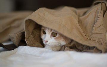 кот, кошка, взгляд, котенок, ben torode, ханна
