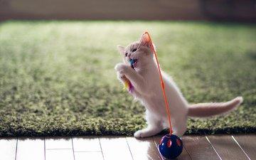 кот, котенок, игрушка, ben torode, ханна, забава