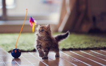 кот, мордочка, кошка, котенок, игрушка, перья, животное, ковер, лапки, детеныш