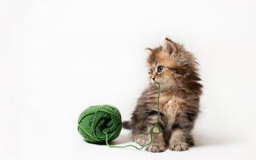 кот, кошка, котенок, игра, белый фон, клубок, нитки, дейзи, бенджамин тород