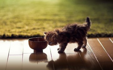 кот, кошка, котенок, ковер, миска, ben torode, дейзи