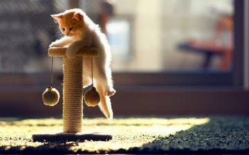 кот, кошка, котенок, игрушка, ковер, солнечные лучи, бенджамин тород, ханна, когтеточка