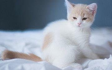 кошка, котенок, малыш, ханна, © benjamin torode