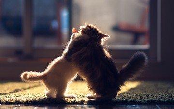 борьба, игра, кошки, котята, дэйзи, бенджамин тород, ханна