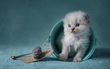 кошка, обработка, котенок, пушистый, голубой, игрушка, сидит, игра, мышь, милашка, мышка, ведро, ведерко, голубоглазый, рэгдолл, мелкий