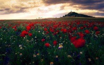 небо, цветы, облака, пейзаж, поле, маки, ромашки