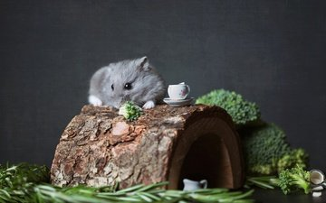 темный фон, домик, мышь, хомяк, бревно, капуста, грызун