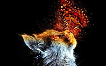 мордочка, кошка, взгляд, бабочка, профиль, черный фон, животное, домашнее животное