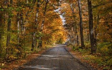 дорога, деревья, природа, лес, осень