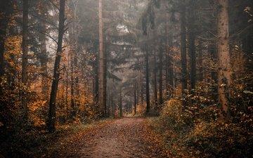 дорога, деревья, природа, лес, листва, осень