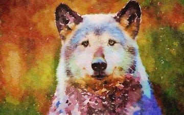 морда, рисунок, хищник, животное, волк