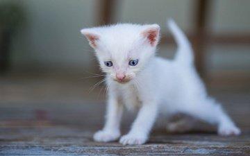белый, малыш, боке, голубые глазки
