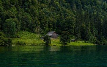 берег, лес, водоем, домик, ели