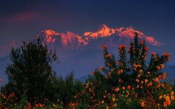 цветы, горы, закат, кусты, гималаи, непал