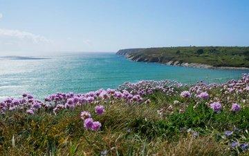 цветы, море, побережье, франци, бретань