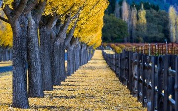 деревья, листья, парк, осень, забор, сша, калифорния, аллея, виноградник, боке