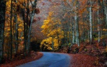 дорога, деревья, лес, листья, осень, поворот
