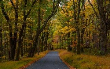 дорога, деревья, лес, осень, пенсильвания, опавшие листья