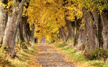дорога, деревья, осень