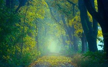 дорога, деревья, природа, лес, листья, туман, осень