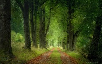 дорога, деревья, природа, лес, пейзаж, чехия